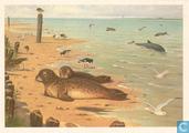 Zeehonden en Bruinvissen