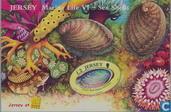 Belgica (dans des mollusques)