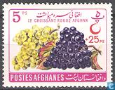 raisins pour le vin