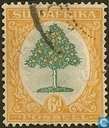 Orange Tree (Afrikaans)