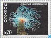 Mittelmeer-Flora