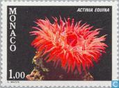 Timbres-poste - Monaco - la flore méditerranéenne