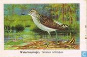 Most valuable item - Waterloopvogel