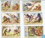 Scimmie le