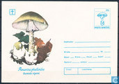 envelope Mushrooms