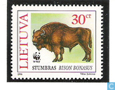 WWF-Wisent or European Bison