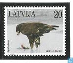 Aquila clanga