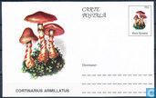 Postkarte Pilze