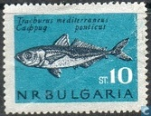 Fishes (Borders in grey)
