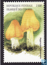 European mushrooms