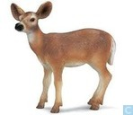 White Tailed Doe