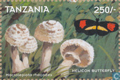 Mushrooms and insects