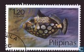 Fish Pilippines