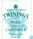 Pure Flowers of Camomile