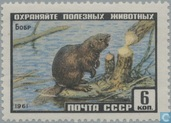 Russian wild animals
