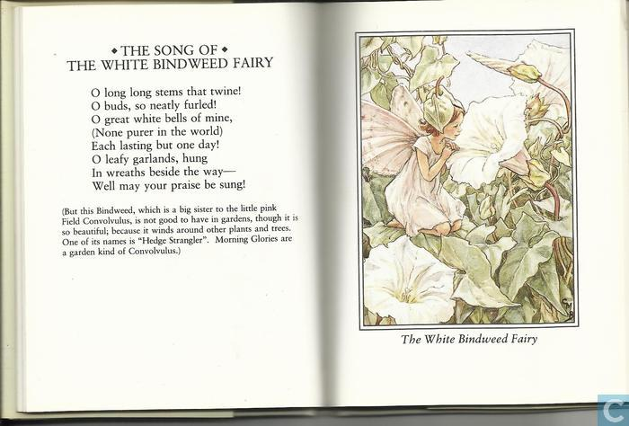 Flower fairies of the wayside - Flower Fairies - Catawiki