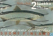 Postage Stamps - Finland - Fish