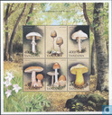 Mushrooms and forest animals