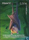 Flying fox of Mayotte