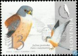 Kestrel-endangered birds