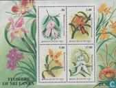 60 Jahre Orchideen Association