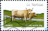 Cows - Nantaise