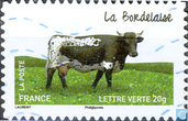 Vaches - La Bordelaise