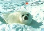 I love seals and whales, laat ze leven