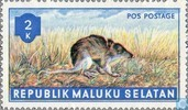 Animals (South Moluccas)