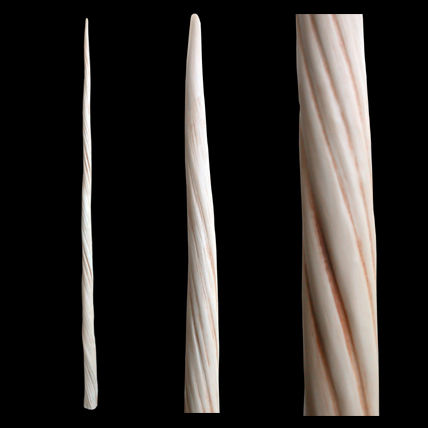 Cast of a Narwhal tooth - Monodon monoceros - 145 cm