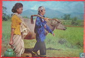 Farmer and his Wife heading for their rice-field, West java