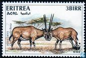 East-African young stag