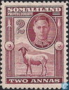 King George VI and Berber black-headed sheep.