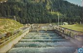 Bonneville dam fish ladders Columbia river Salmon