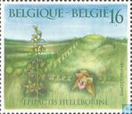 Postage Stamps - Belgium [BEL] - Broad-leaved Helleborine