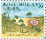 Postage Stamps - Belgium [BEL] - Morning Glory