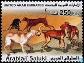 Arab greyhounds
