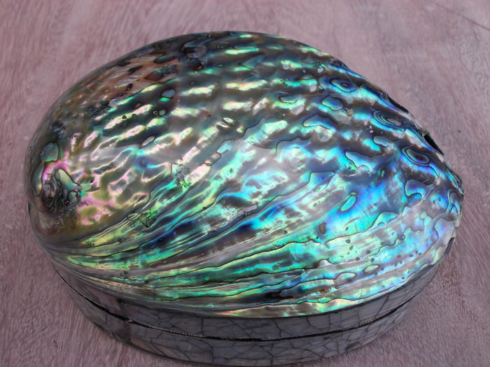 Abalone Shell Jewellery Box New Zealand Catawiki