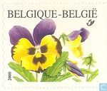 Postage Stamps - Belgium [BEL] - Pansy