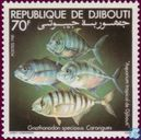 Poisson aquarium tropical Djibouti
