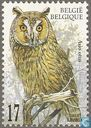 Postage Stamps - Belgium [BEL] - Long-eared Owl
