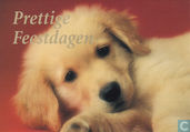 Honden: Golden Retriever