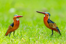 Two hand-carved African kingfishers of balsa wood