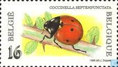 Coccinelle à sept points
