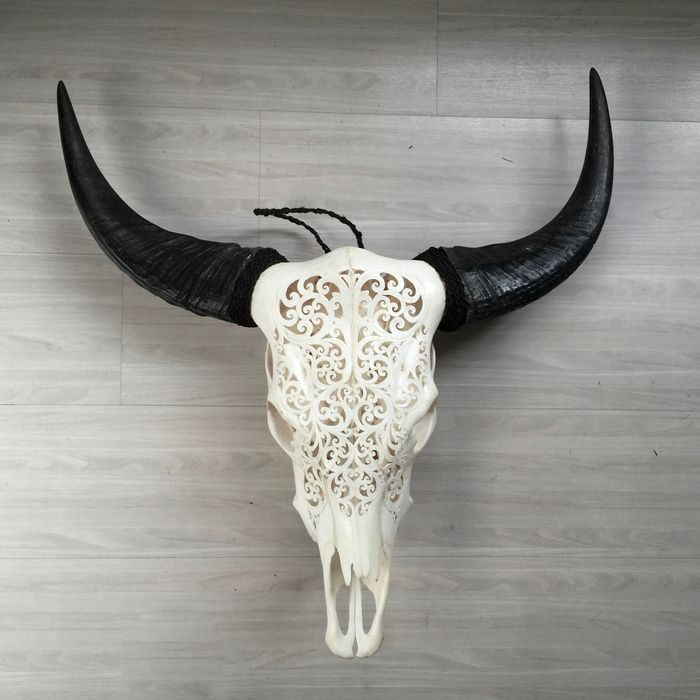 carved skull of a water buffalo width 70 cm length 73 cm catawiki. Black Bedroom Furniture Sets. Home Design Ideas