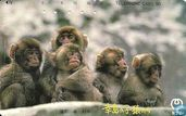 Phone cards - Nippon Telegraph and Telephone Corporation - Monkeys