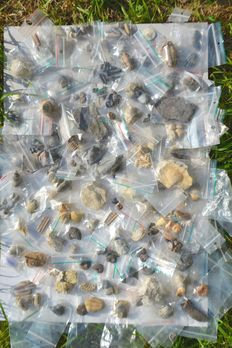 Collection of 250+ fossils