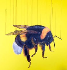 Louise McNaught - Free Bee
