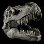 Check out our Fossils auction