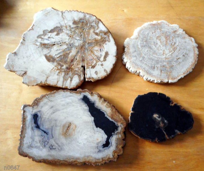 Four chunks of petrified wood - 27, 15, 19 and 25 cm - 7.8 kg